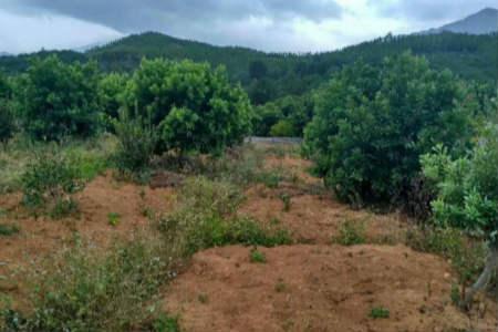 苏州东山杨梅苗种植图片